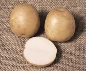 potato_rocket